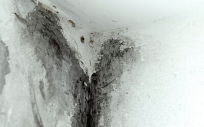 How to Identify and Prevent Mould in Your Home